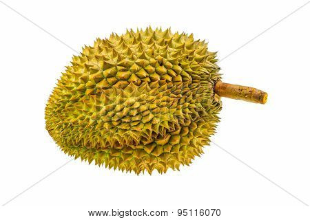 Durian fruit isolated on white background, Fresh fruit from orchard, King of fruit from Thailand