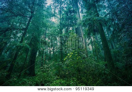 American Northwest Rainforest