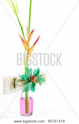 Beautiful Heliconia Flower Blooming Gold Bow Tie On Isolate White Background.