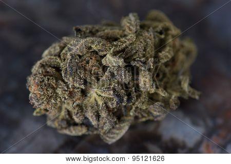 Close up macro of Bordello Medical Marijuana