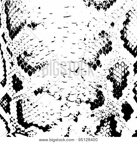 Snake Skin Abstract Texture. Black On White Background. Vector