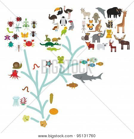 Evolution In Biology, Scheme Evolution Of Animals Isolated On White Background. Children's Educa