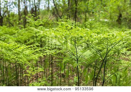 Background texture forest glade green ferns