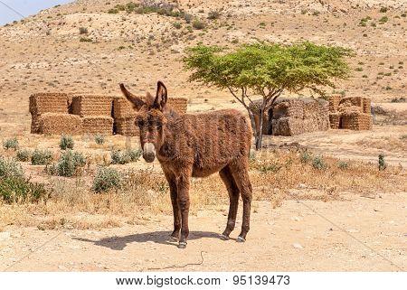 Desert Landscape, Donkey In Negev Desert.