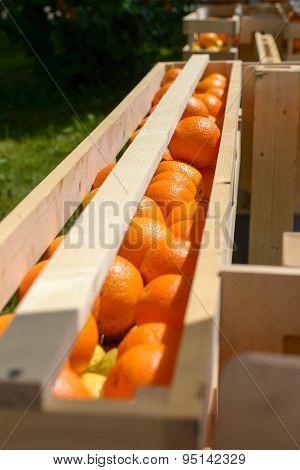 Oranges in wooden crates
