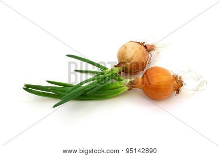Raw Onion With Green Sprouts
