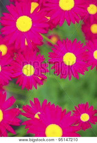 Purple Flowers On The Field.
