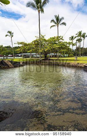 Garden in Hilo, Hawaii