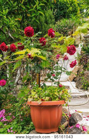 mediterranean garden with flowers