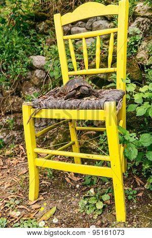 Yellow garden chair and a turtle