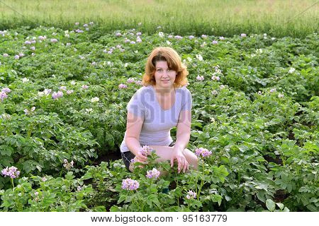 Woman Cultivates Potatoes On A Summer Residence