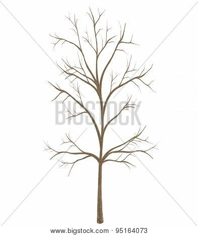 High Quality Tree Isolated On White Background
