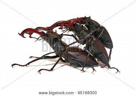 Confused Beetles