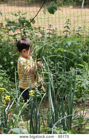 Junge helfen Opa im Garten 09