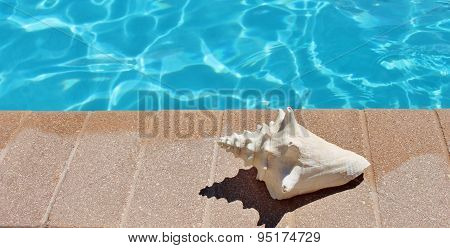 Poolside Holiday Vacation Scenic Conch Shell