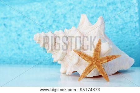 Conch shell with Blue background star fish