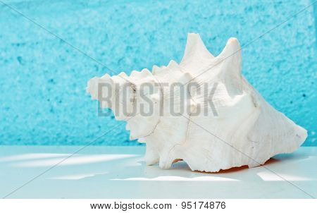Conch shell with Blue background