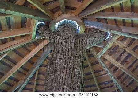 roof of tree house