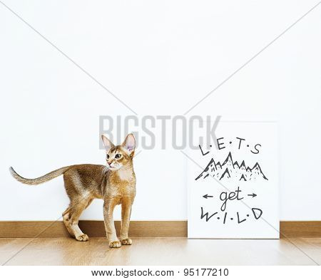 Hipster Scandinavian Room With Cat. Motivational Quote Lets Get Wild