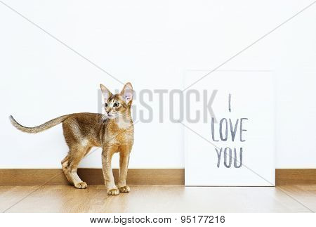 Hipster Scandinavian Design With Cat And Frame Follow Your Heart But Take Your Brain With You