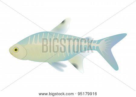 X Ray Fish-