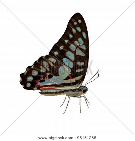 Beautiful Butterfly On White Background