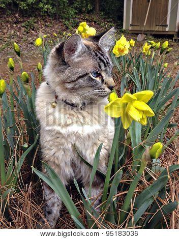 Cat In A Garden