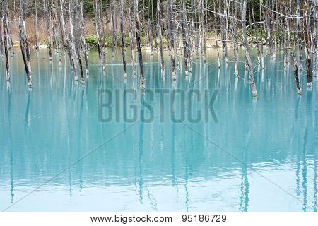 Blue pond and dead trees