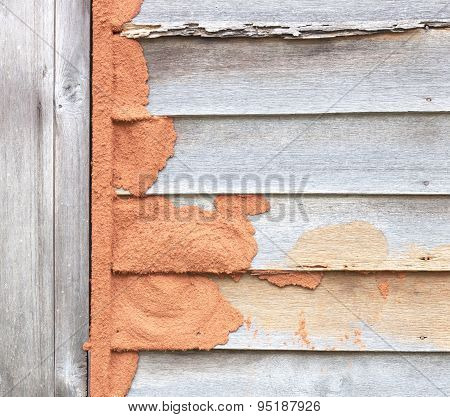 Termites Eat Wood Wall Weathering Old.