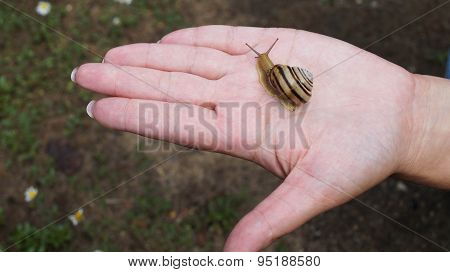 Snail and open palm