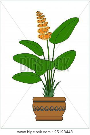 Potted Plant. Houseplants. Vector.