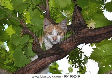 The cat looks at the leaves of the vine