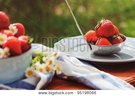 fresh organic home growth strawberries in summer garden in plate