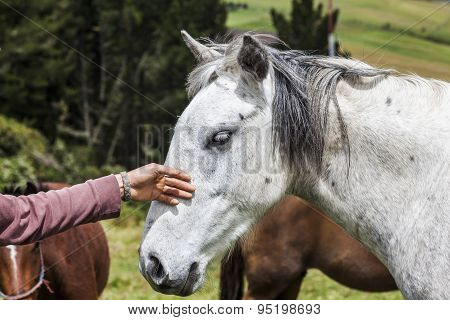 Horses On The Heights Of The Mountains Of Ecuador