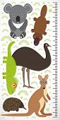 picture of measuring height  - Animals Australia  - JPG