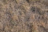 picture of dry grass  - image of many dry grass at autumn - JPG