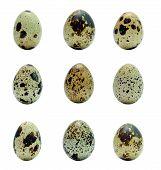 image of quail  - nine quail eggs collage isolated over white - JPG