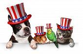 foto of bird-dog  - Independence Day pets celebrating the United States fourth of july holiday with a dog cat bird and hamster wearing hats with the american stars and stripes - JPG
