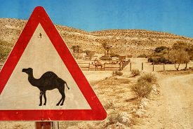 picture of camel  - Road sign  - JPG