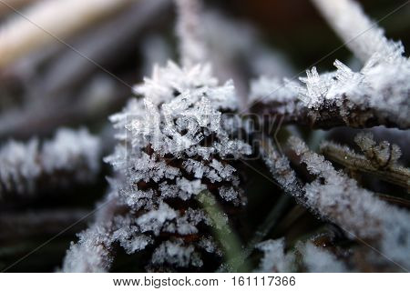 Frozen branches and foliage in hoar frost