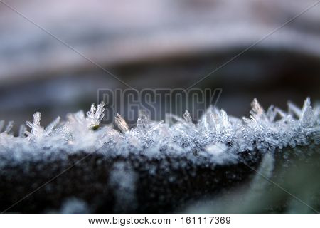 A frozen branch lined with hoar frost