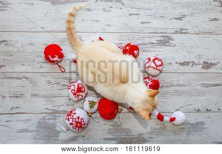Cat On Christmas Cap And Balls