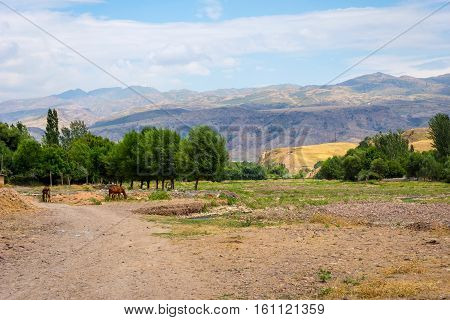 Horses In Steppe And Hills In Rural Kazakhstan