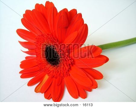 A Isolated Flower