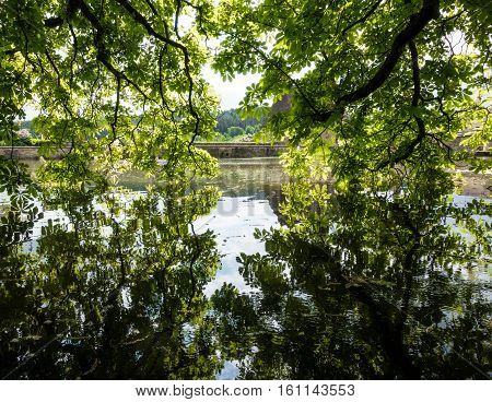 The Branches Of A Tree Above  Pond Water