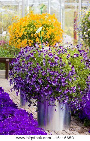 flower bouquets, Keukenhof Gardens, Lisse, Netherlands