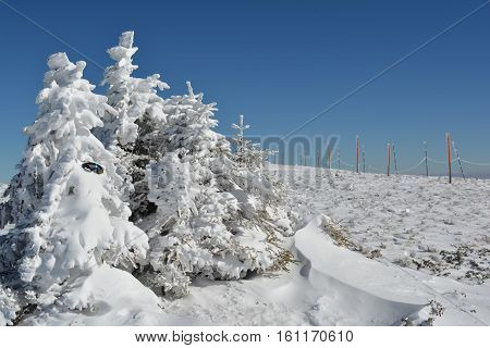 Group of small fir trees covered by snow forgotten goggles snow drifts in foreground and row of pillars with safety rope in background on the top of mountain Kopaonik Serbia
