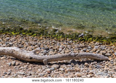 By the water's edge - Driftwood washed up on the shore by the coast in Ajaccio in Corsica
