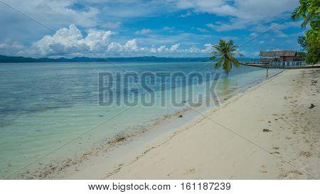 Fallen Coconut Palms on Sandy Beach near Diving Station on Kri Island, Raja Ampat, Indonesia. West Papua