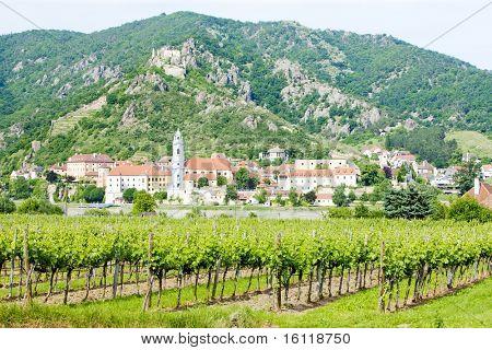 Durnstein, vineyard in Wachau Region, Lower Austria, Austria